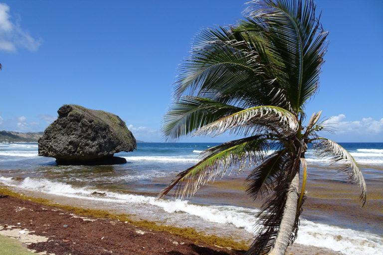Bathsheba auf Barbados