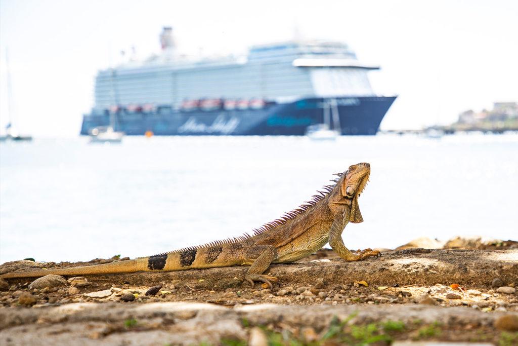 Plage la Francaise in Fort-de-France: Leguan mit Schiff