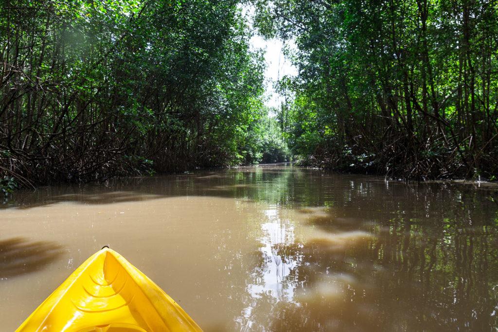 Mit dem Kajak durch die Mangroven von Martinique