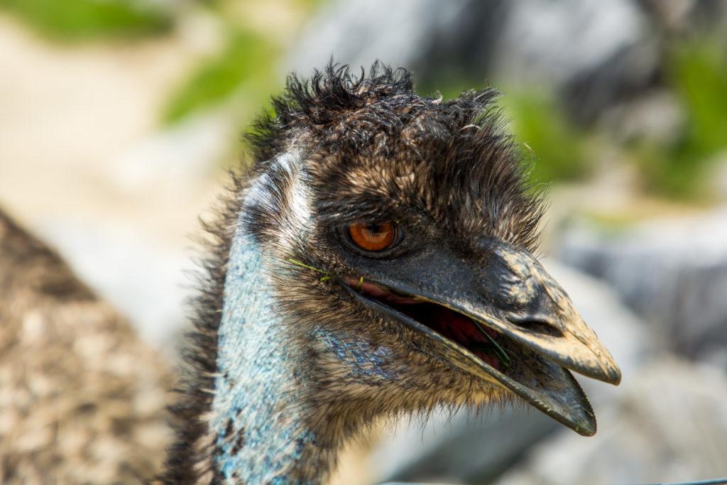 Ostrich Farm auf Curacao in der Karibik