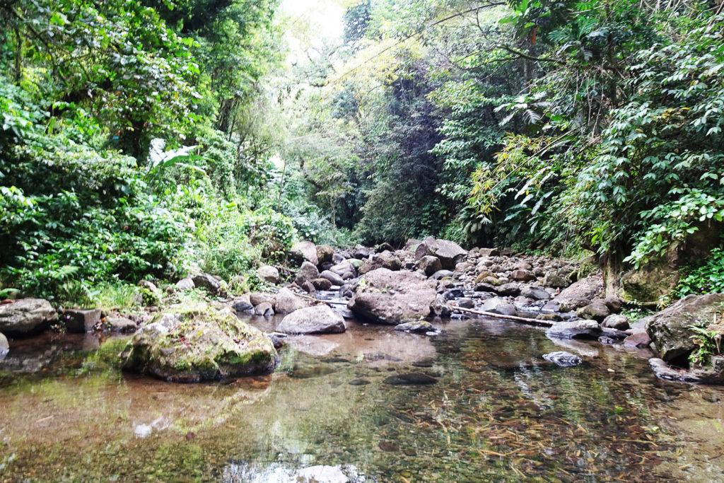 Regenwaldwanderung auf der karibischen Insel Martinique